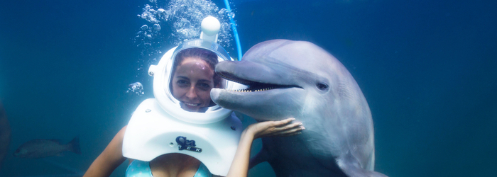 activities_in_cancun_-_how_to_choose_a_swim_with_dolphins.png