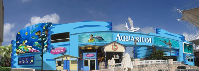 Activities in Cancun, Delphinus.png