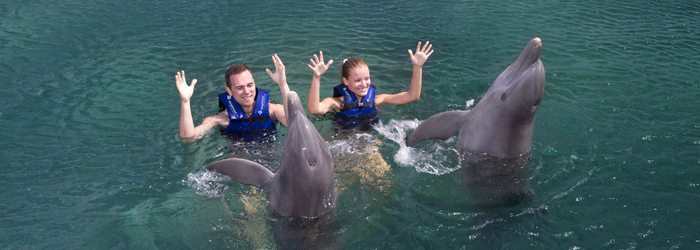 exclusive-swim-with-dolphins.png