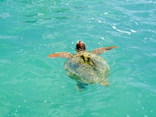 ecotourism-riviera-maya-1.jpg