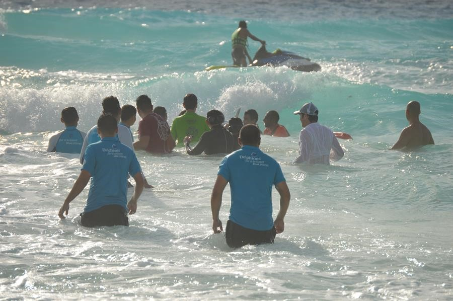 dolphin-rescue-on-cancun