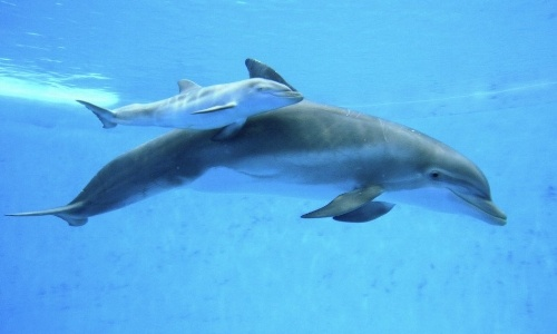 delphinus-breeding-program.jpeg