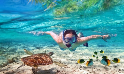 swimming-with-dolphins-in-puerto-morelos-snorkel