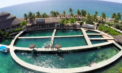 swimming-with-dolphins-in-puerto-morelos