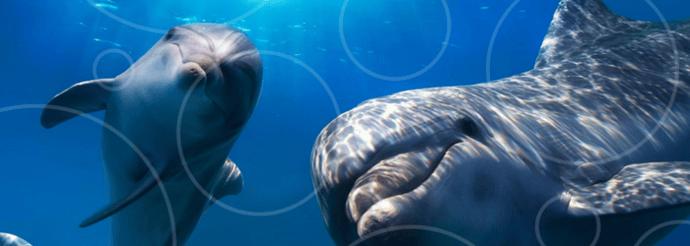 delphinus-happy-dolphins