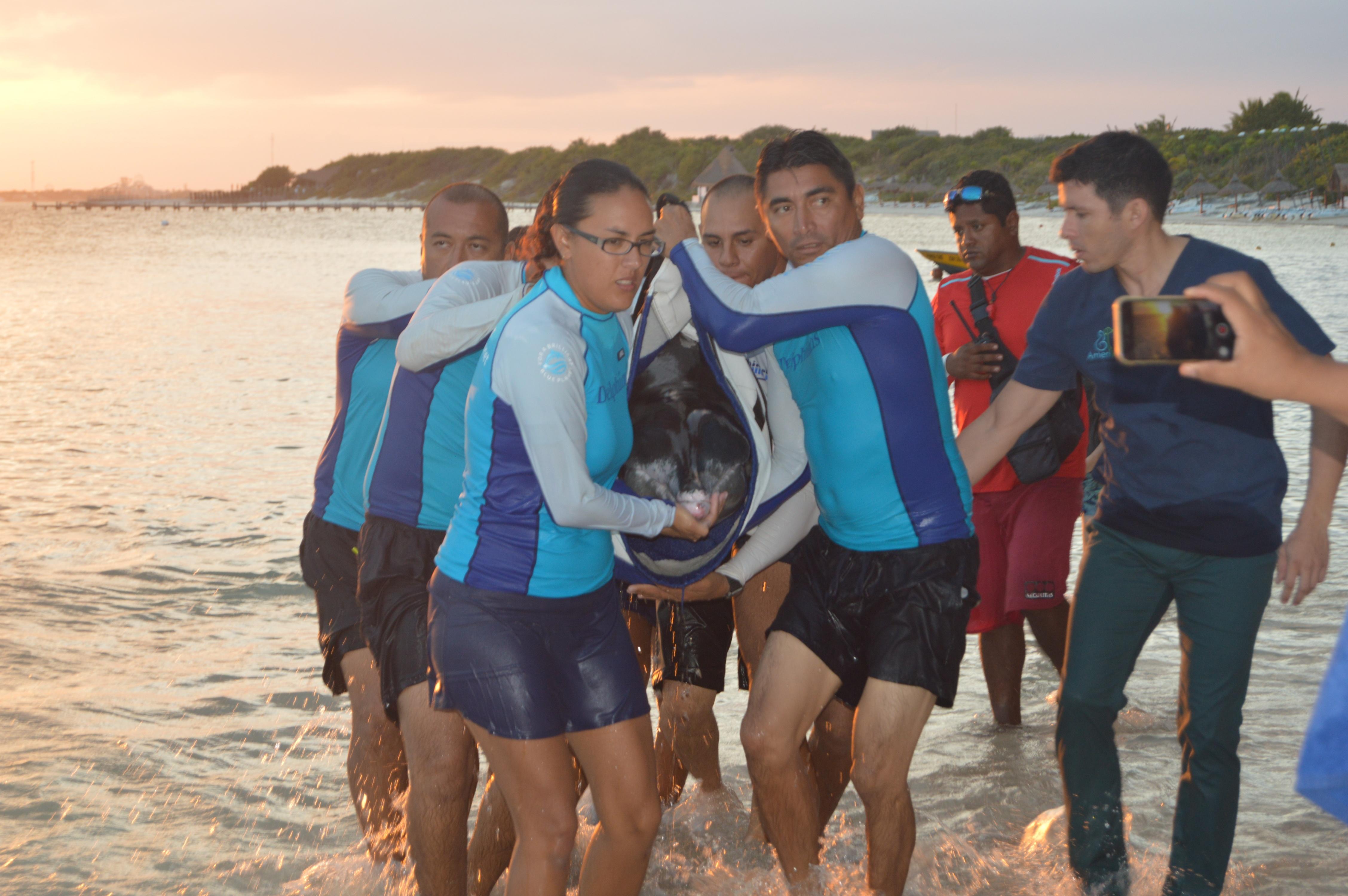 dolphins-and-pollution-delphinus-welfare-program .jpg