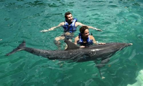fin-de-ano-en-cancun-nado-con-delfines.jpg