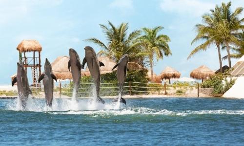 nado-con-delfines-en-hyatt-ziva.jpg
