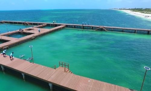 nado-con-delfines-playa-mujeres.jpg