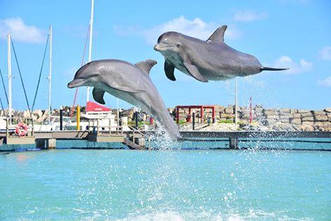 DolphinAwarenessMonth-Contamiación afecta delfines.jpg