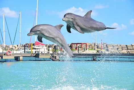 Dolphin-Awareness-Month-Contamiacion-afecta-delfines.jpg