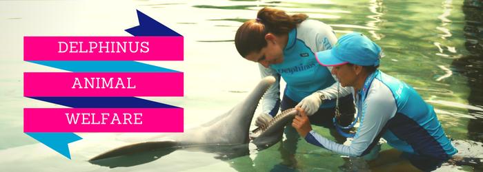 Delphinus-animal-welfare