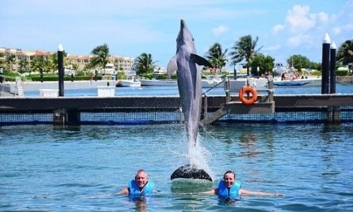 conoce-delphinus-puerto-morelos.jpg