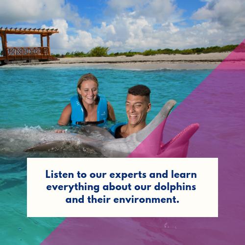 nadar-con-delfines-por-primera-vez (4)