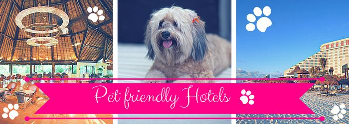 pet-friendly-hotels.png