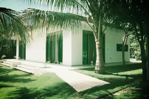 puerto-morelos-airbnb-palmera.png