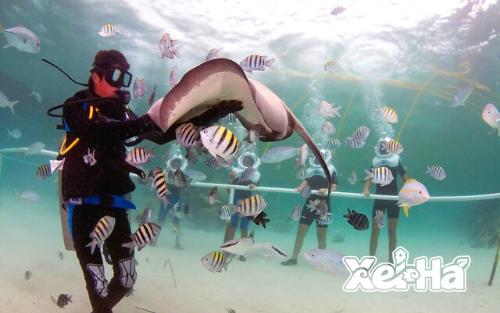 Delphinus-swim-with-dolphins-in-xel-ha-aquarium
