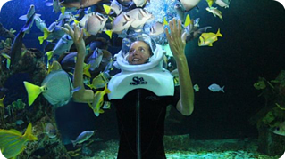 Delphinus Aquarium Trek