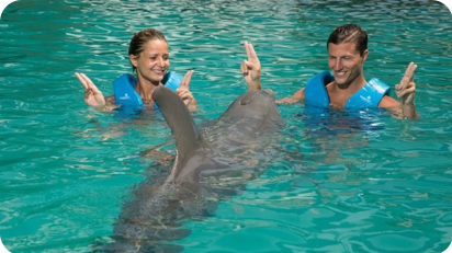Delphinus Couples
