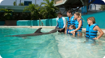 Delphinus Splash