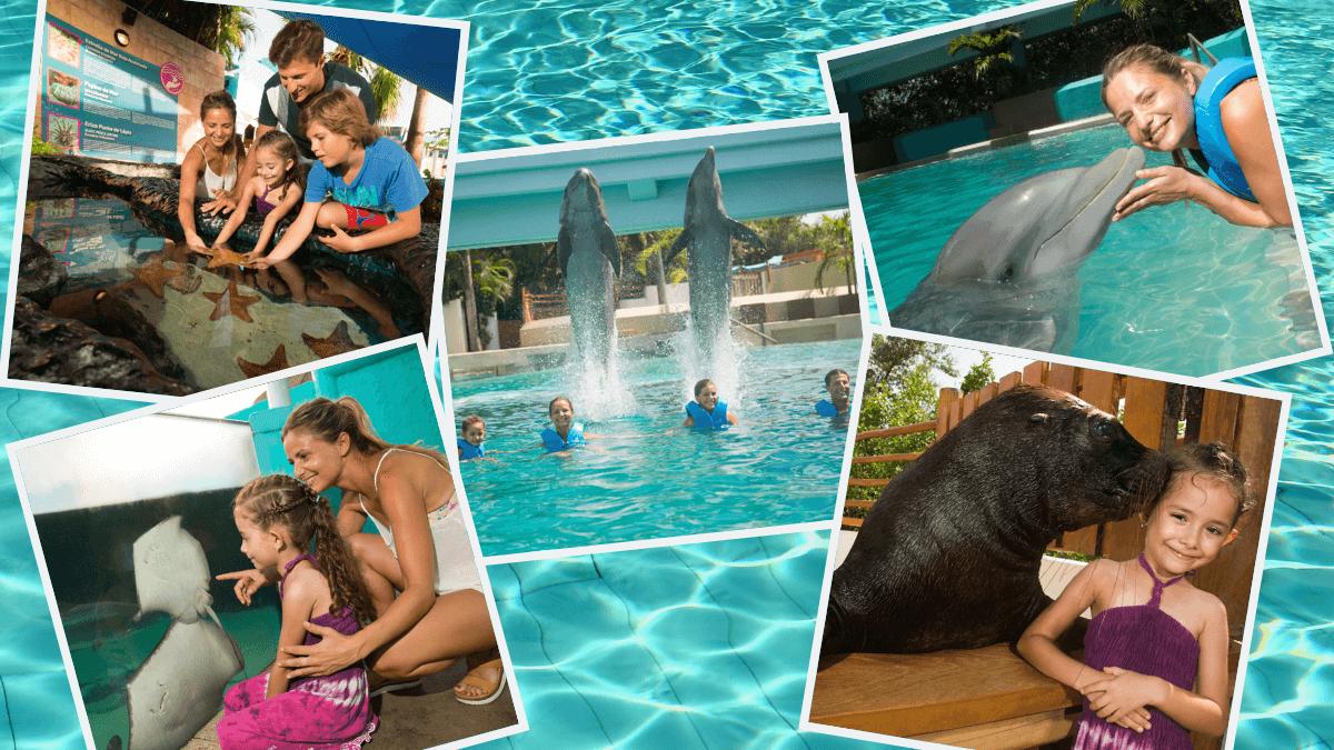 Delphinus-visit-interactive-aquarium-cancun