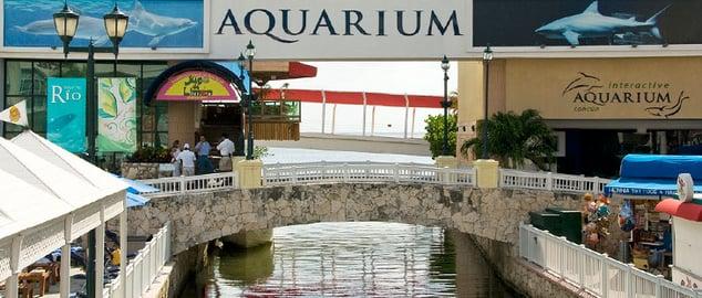cancun-aquarium-doplhins.jpg