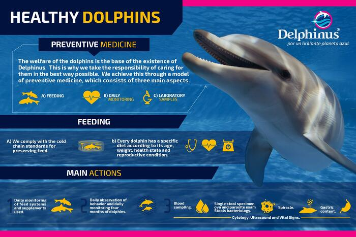 The_importance_of_swimming_with_healthy_dolphins.jpg
