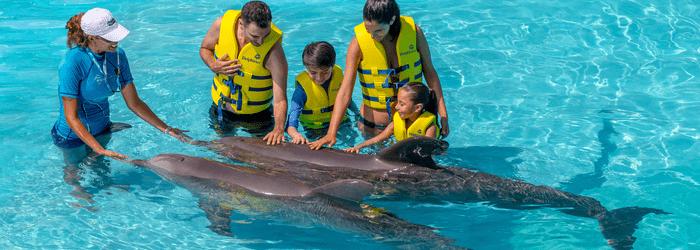 nado_con_delfines_y_todo_lo_que_tienes_que_saber_-_Delphinus-min.png