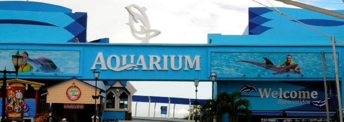 La-Isla-Shooping-Mall-Cancun-nado-con-delfines-Delphinus.jpg