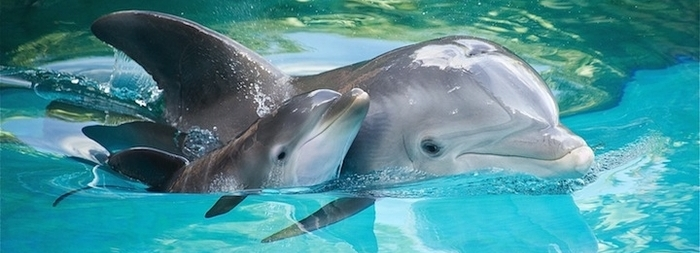 swim_with_dolphins_in_cancun_curious.png