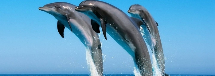 World_Animal_Day_-_Delphinus.png