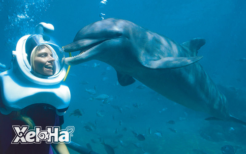 dolphin-trek-swim-with-dolphins-in-cancun.png