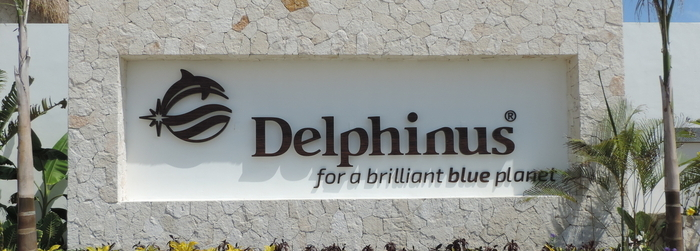 swim with dolphins in mexico_-_working at Delphinus.png