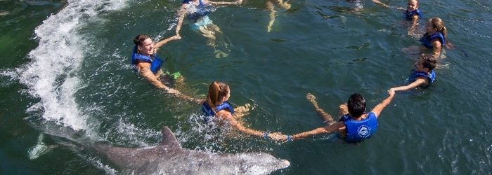 activities-cancun-swimming-with-dolphins.png