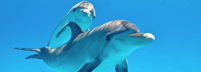 7 facts you didn't know about dolphins