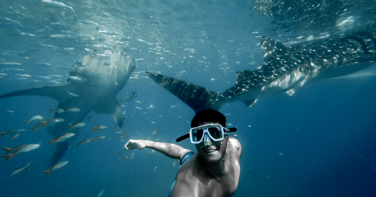 What is it like to swim with a whale shark