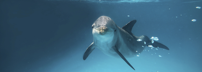 Live an all-inclusive swim with dolphins in Cancun