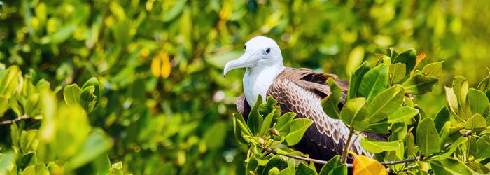 Las Aves Migratorias rumbo al Caribe Mexicano
