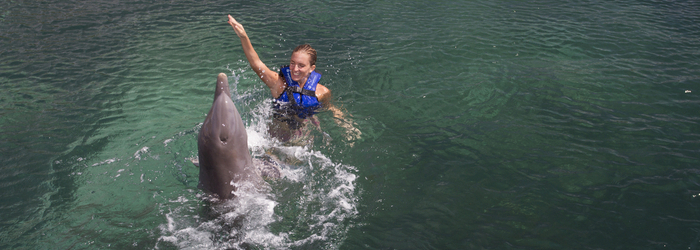 Swim with dolphins: the best experiences in Mexico