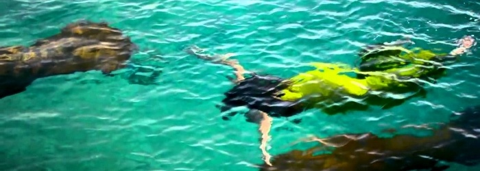 Plan your eco-touristic vacations in the Mexican Caribbean!