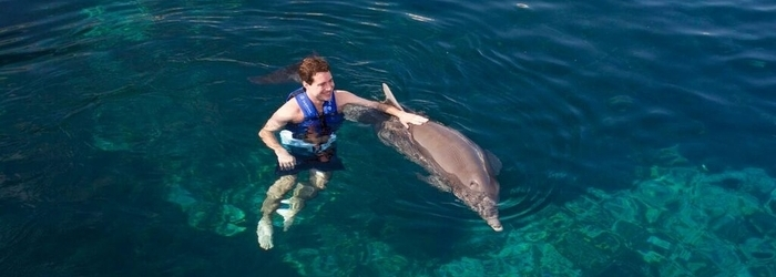 Are you traveling solo? Discover the perfect swim with dolphins for you!