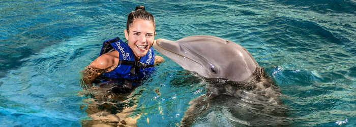 Choose a swim with dolphins and get a 30 percent discount!