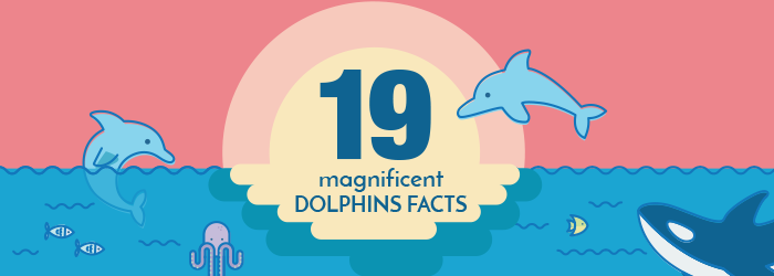 19 magnificent dolphin facts [infographic]