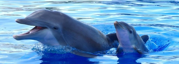 Why maternal care in dolphins matters?