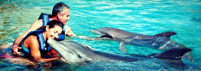 ¿Cuánto cuesta nadar con delfines?