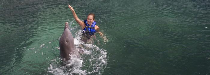Nado con delfines en el caribe Mexicano - Delphinus