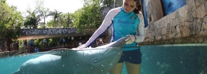 Delphinus Participates in International Animal Welfare Cetacean Study.
