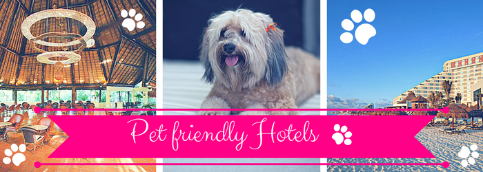 Bringing your pet? You'll need a great pet friendly hotel in Cancun