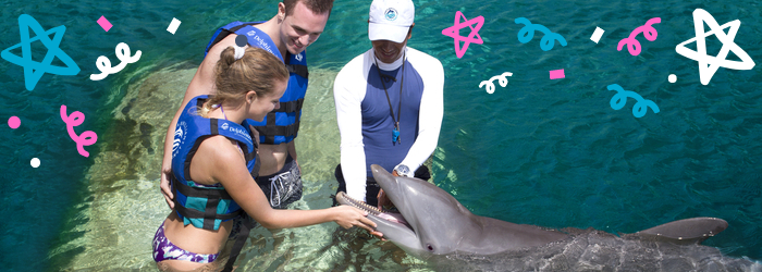 Have a wonderful first swim with dolphins at Delphinus!
