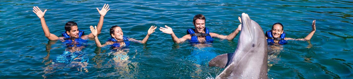 nado-con-delfines-en-cancun-delphinus